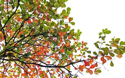 Programme für die Herbstferien